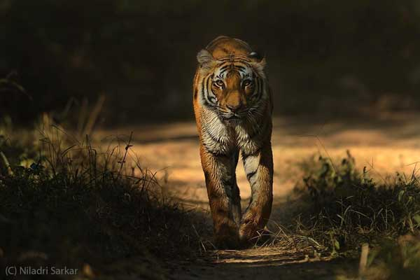 Jim Corbett National Park & Tiger Reserve
